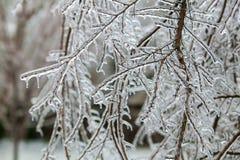 冰暴 库存照片
