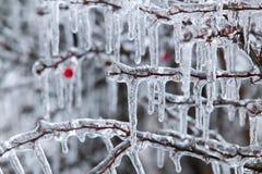 冰暴 免版税库存图片