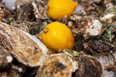 冰柠檬牡蛎 免版税图库摄影