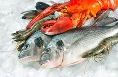 黑冰查出的海鲜 免版税库存图片
