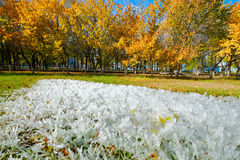 冰柱和金黄叶子 库存图片