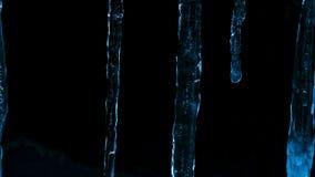 冰柱在反对森林和冬天微明黑暗的晚上  免版税库存照片