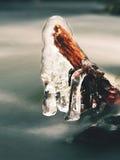 冰柱在枝杈和冰冷的吠声垂悬在辣椒急流小河上 库存图片