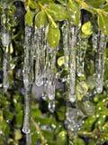 冰柱在植物的纽约城 库存照片
