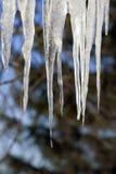 冰柱熔化 库存照片