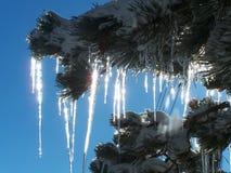 冰柱闪闪发光 免版税图库摄影