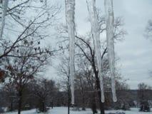 冰柱,结冰的水,冬天在阿肯色 免版税库存照片