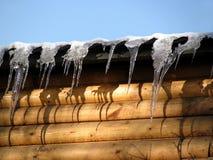 冰柱围住木 库存图片