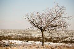 冰树 库存照片