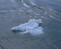冰浮游物在阿拉斯加 免版税库存照片