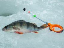 冰渔在俄罗斯 免版税库存图片