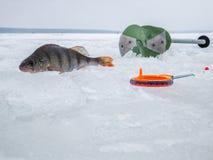 冰渔在俄罗斯 免版税库存照片