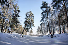 冰湖在冬天木头之下的横向雪 图库摄影