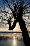 冰熔化的结构树 库存图片