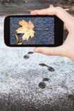 结冰的下落的叶子的图片在第一雪的 库存图片