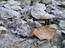 结冰的叶子 库存图片