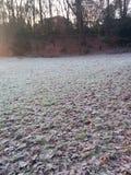 结冰的弗罗斯特草离开冬天 免版税库存图片