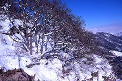 结冰的树 库存图片