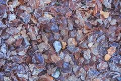 冻结冰的草和叶子 免版税库存图片