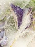 结冰的紫色和绿色抽象 库存图片
