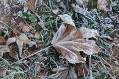 冰盖的叶子 免版税库存照片