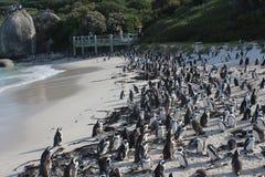 冰砾在开普敦南Afric使-一个独特的企鹅海滩靠岸 免版税库存照片