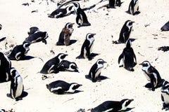 冰砾海滩在开普敦 免版税库存图片