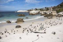 冰砾海滩的企鹅殖民地在开普敦附近 免版税库存照片