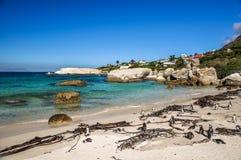 冰砾海滩- Simon& x27; s镇,开普敦,南非 库存图片