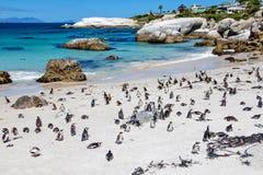 冰砾的企鹅殖民地靠岸,开普敦,南非 免版税库存照片