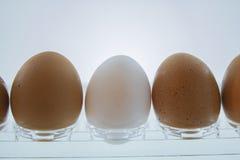 冰箱和鸡蛋 白色和棕色 免版税库存照片