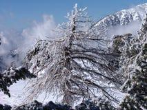 冰结构树 库存照片
