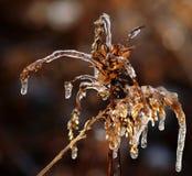 冰蜘蛛 免版税库存照片