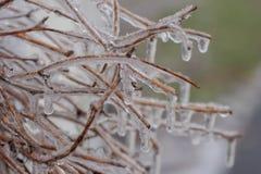 冰被装箱的枝杈特写镜头  库存照片