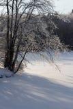 冰被装载的树 免版税库存图片
