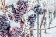 冰酒 冰酒的葡萄酒红葡萄在冬天情况和雪 图库摄影