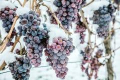 冰酒 冰酒的葡萄酒红葡萄在冬天情况和雪 免版税库存图片