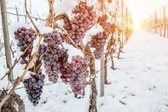 冰酒 冰酒的葡萄酒红葡萄在冬天情况和雪 免版税图库摄影