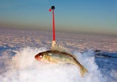 冰钓鱼竿和出王牌 库存图片