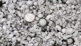 冰雹估量与一枚更大的硬币,在地面上的雹子在雹暴,了不起的大小冰雹以后  免版税库存照片