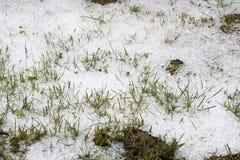 冰雹在草的冰球 免版税库存图片
