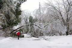 冰暴- 2013年12月22日南安大略 免版税库存照片