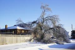 冰暴- 2013年12月22日南安大略 免版税图库摄影
