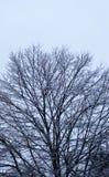 冻结冰暴结构树 免版税库存图片