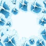 冰蝴蝶花 库存图片