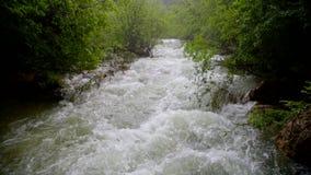 冲下来在绿色森林的迅速河流程 股票录像