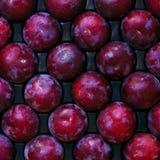 冲减新鲜水果准备好的成熟发运结构树 库存照片