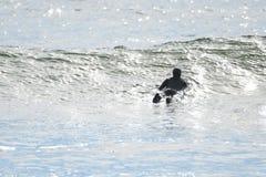 冲浪在La推挤的第一个海滩, WA 免版税库存图片