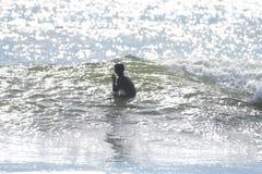 冲浪在La推挤的第一个海滩, WA 免版税库存照片