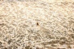 冲浪早晨 库存照片